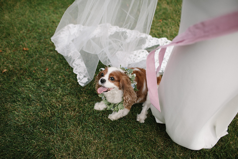 Chicago Backyard Wedding Photos035.jpg