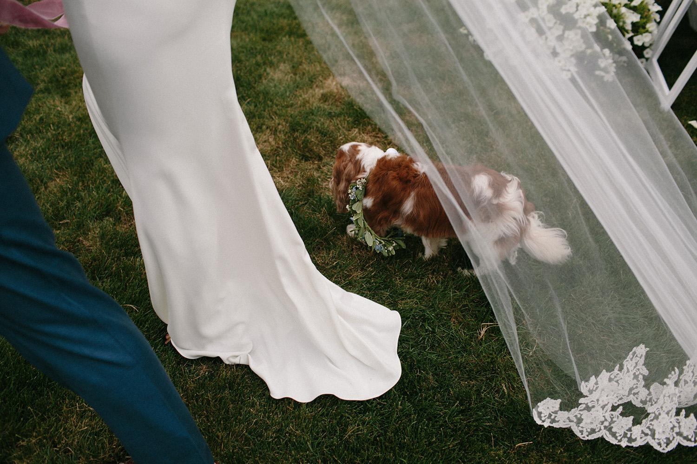 Chicago Backyard Wedding Photos052.jpg
