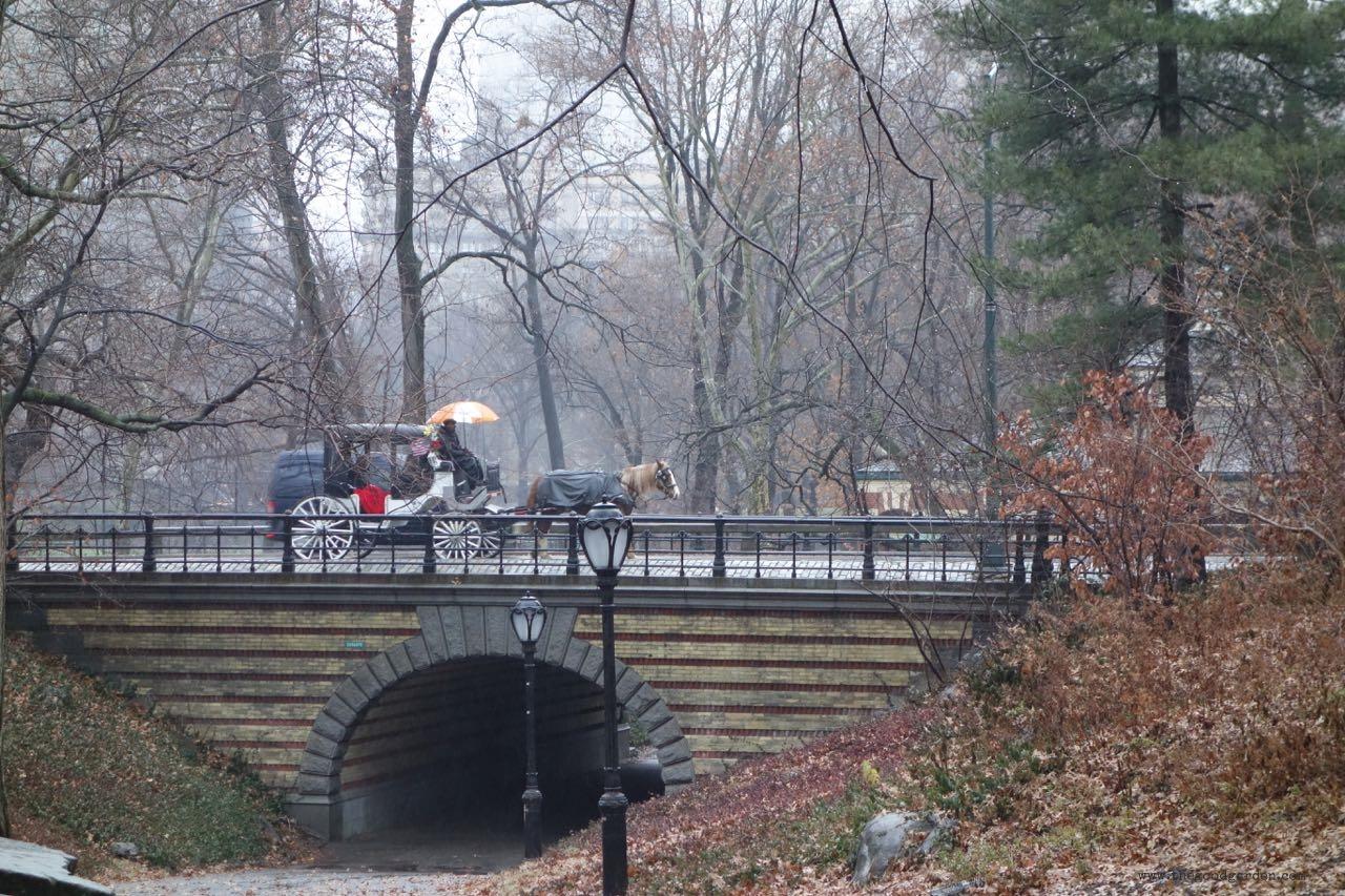thegoodgarden|centralpark|NYC|4659.jpg