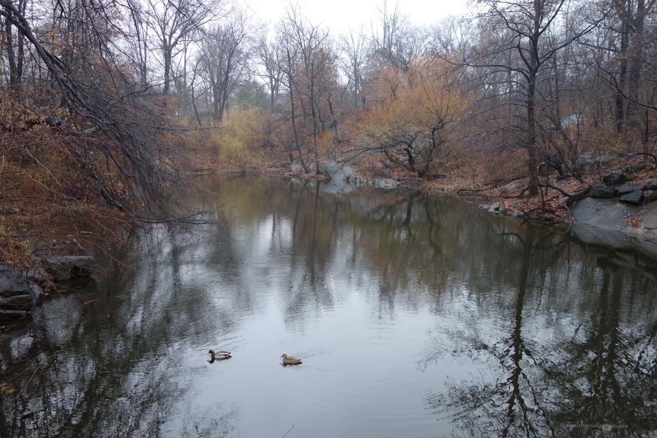 thegoodgarden|centralpark|NYC|4709.jpg