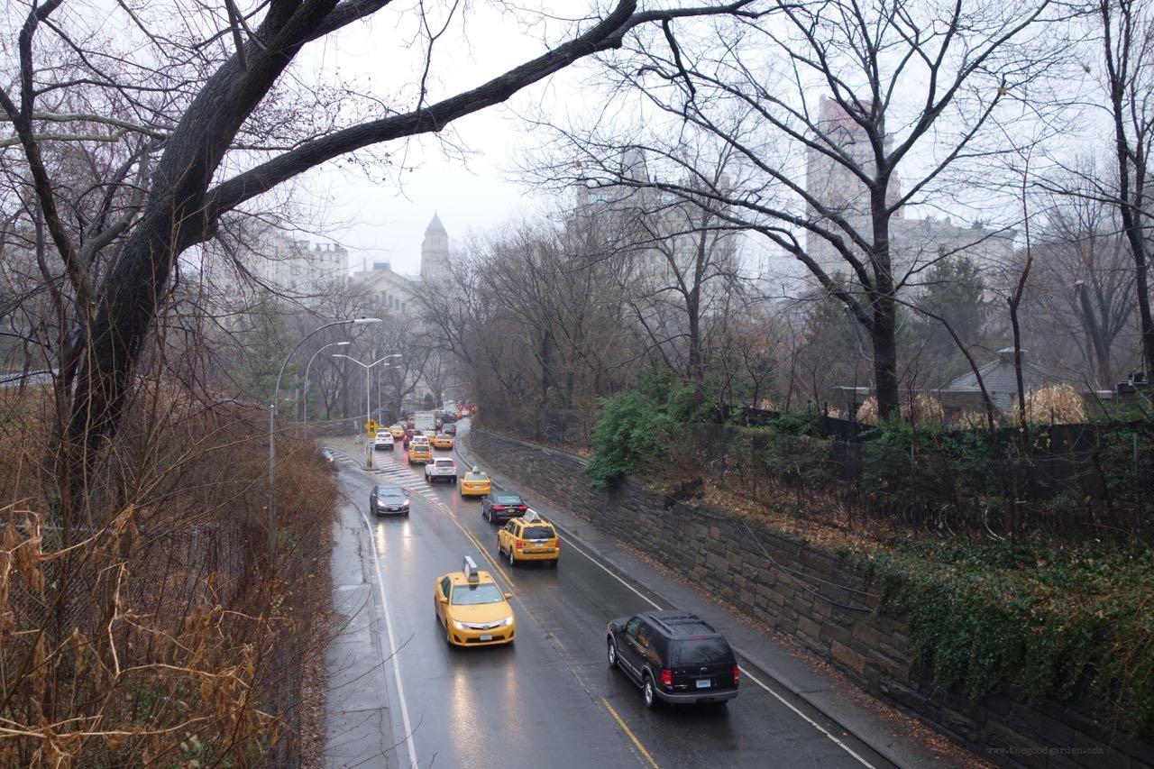 thegoodgarden|centralpark|NYC|4656.jpg