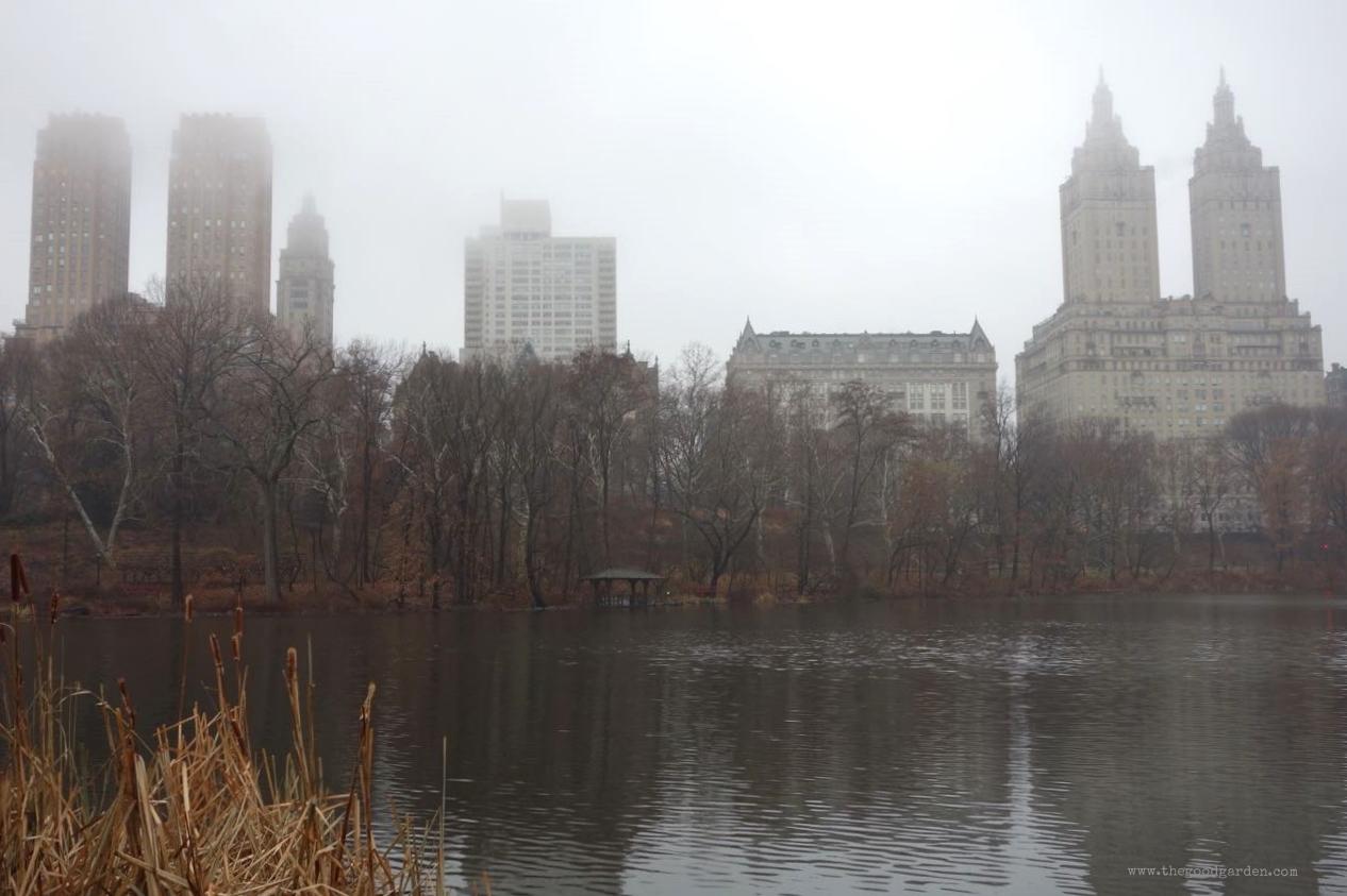 thegoodgarden|centralpark|NYC|4594.jpg