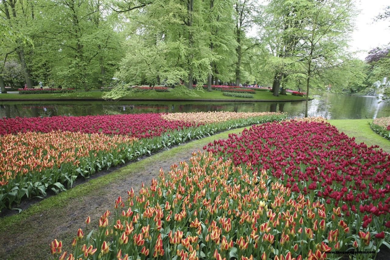 thegoodgarden|keukenhof|netherlands|6549.jpg