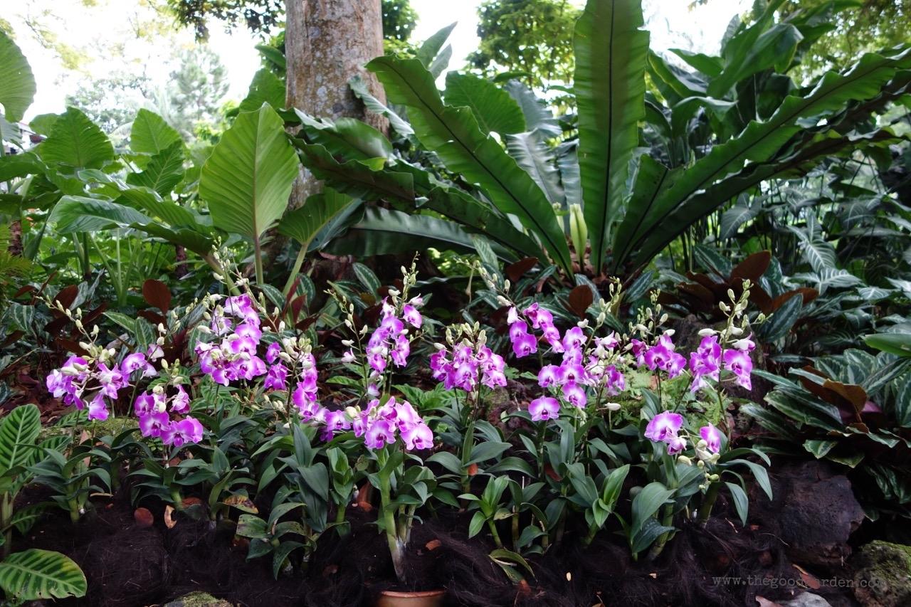 thegoodgarden|singapore|01283.jpg