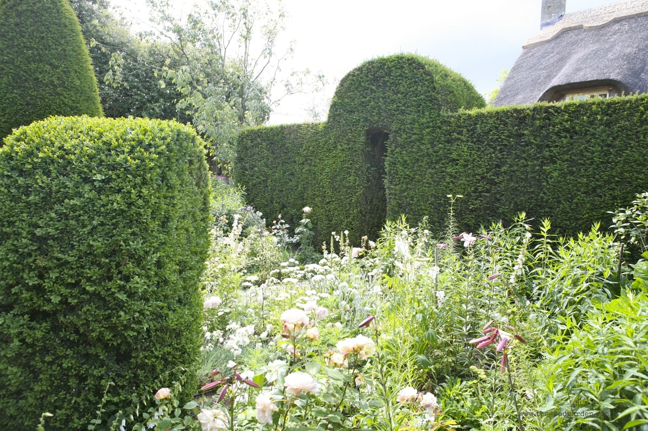Best Garden Hedges The Good Garden