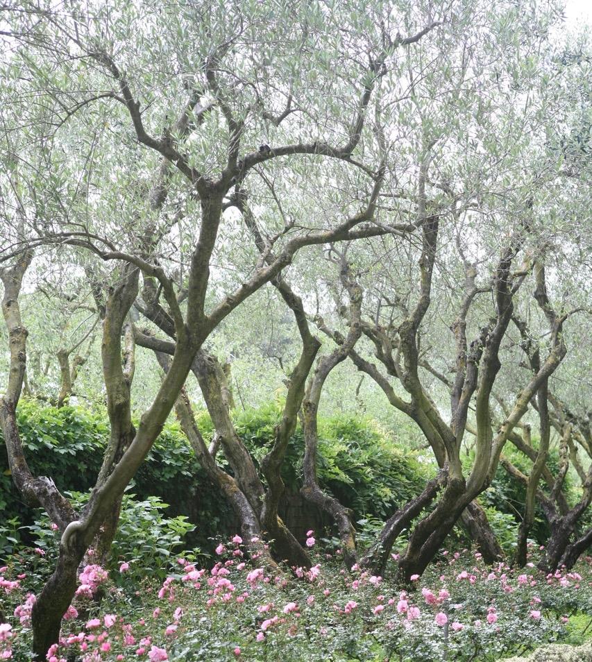 thegoodgarden|landriana|russellpage|4266.jpg