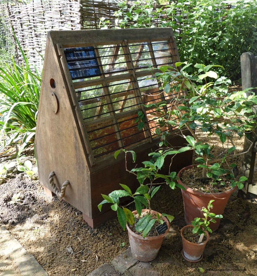 A Wardian case at  Chelsea Physic Garden, London .