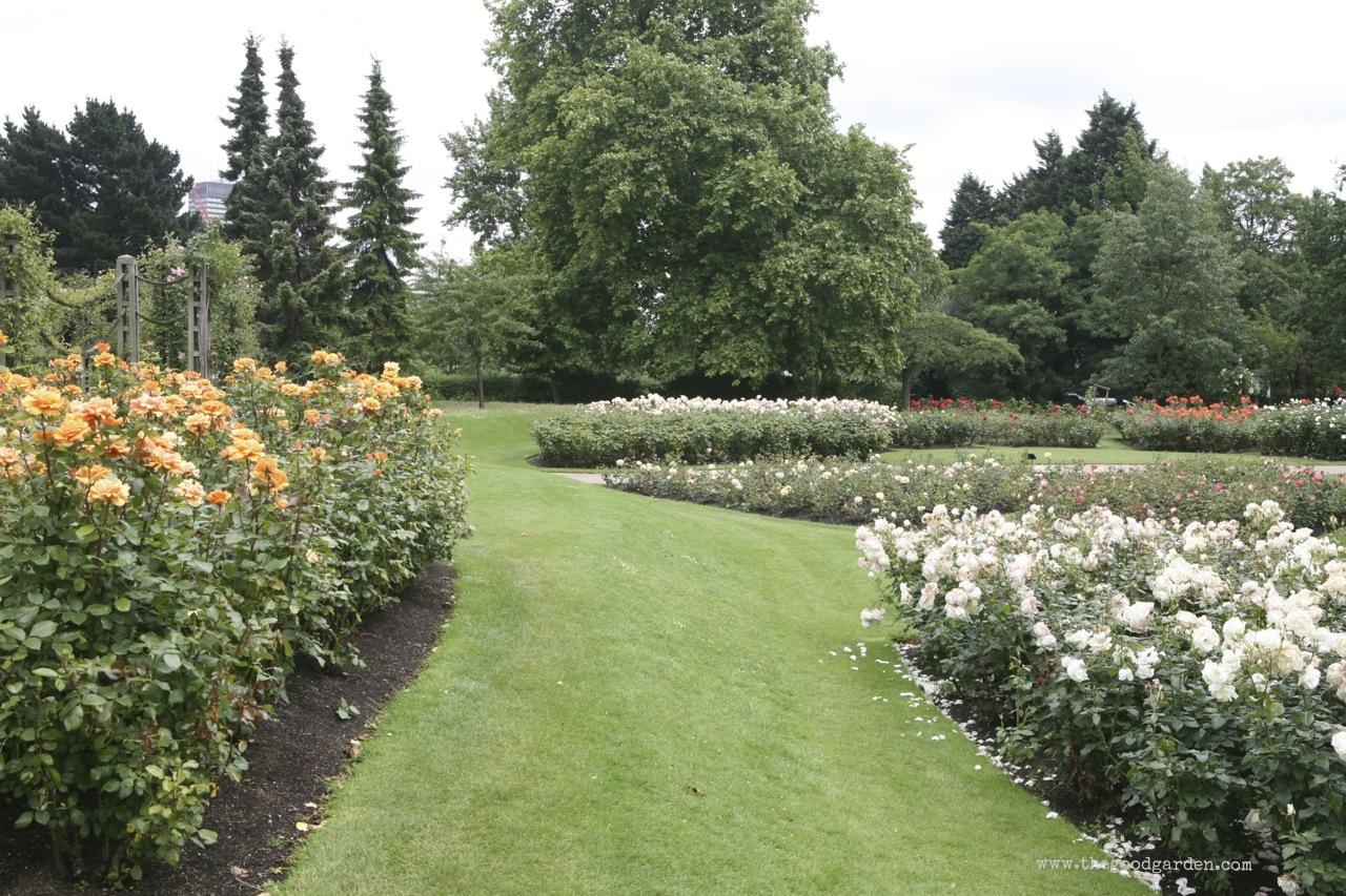 thegoodgarden|regentspark|3902.jpg