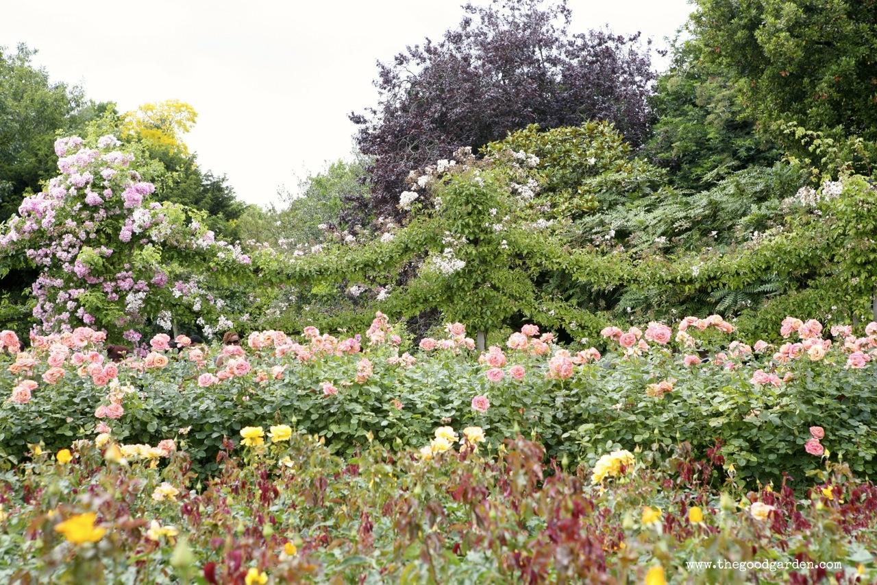 thegoodgarden|regentspark|3895.jpg