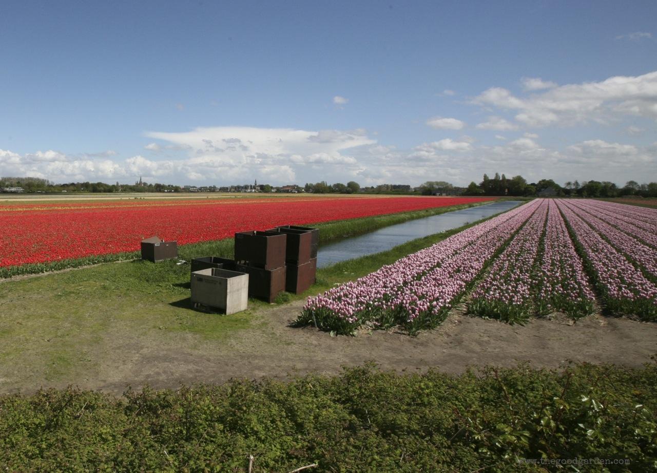 thegoodgarden|tulipfields|netherlands|7006.jpg