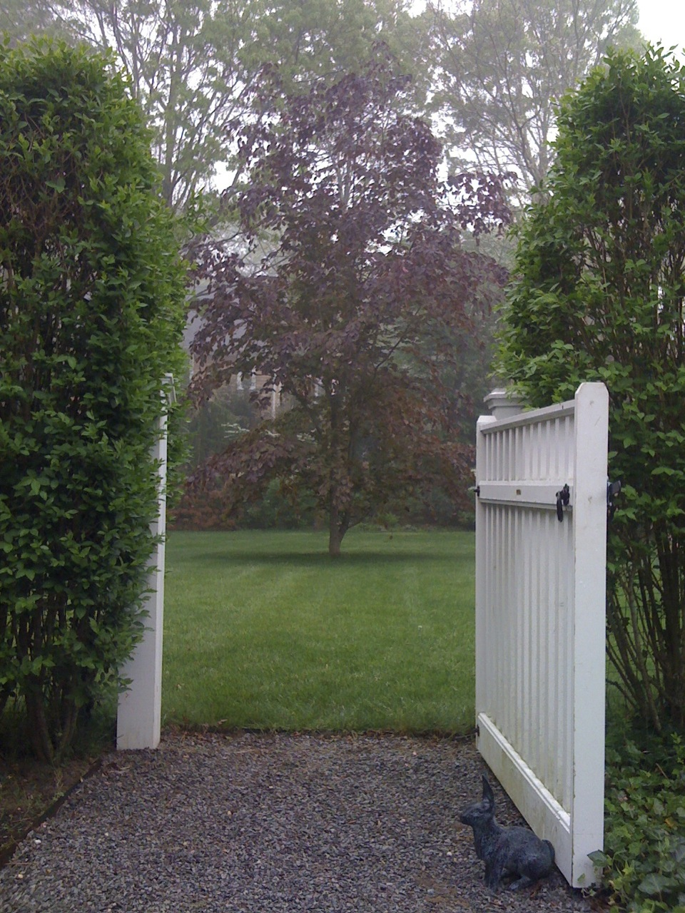 A white picket gate frames a copper beech tree in East Hampton, NY.