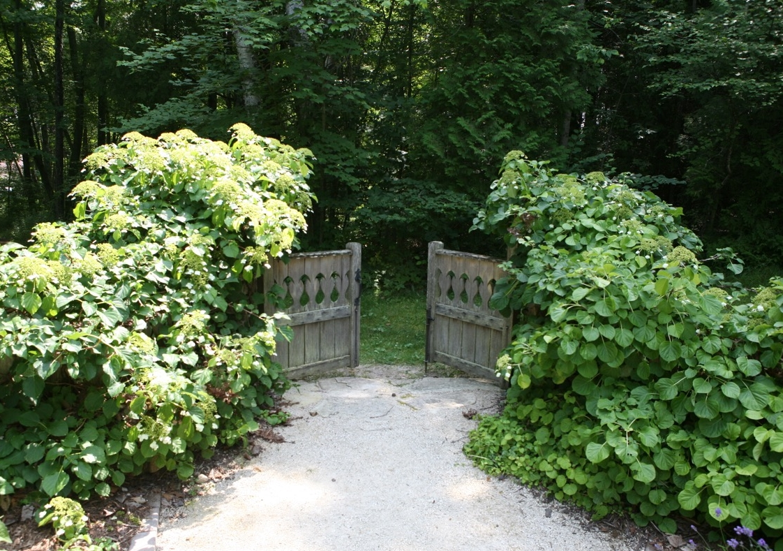 "A wooden gate engulfed in climbing hydrangea sits slightly open at the Shakespeare Garden of Lawrence University's ""Bjorklunden"" in Door County, Wisconsin."