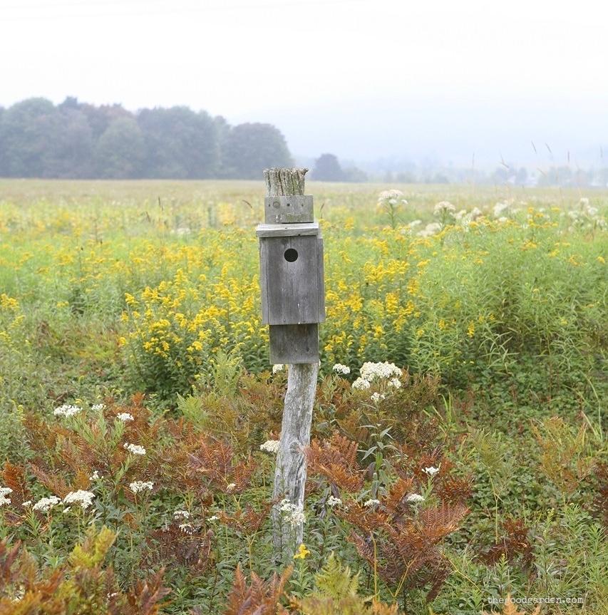 thegoodgarden|canaanvalley|westvirginia|1562.jpg