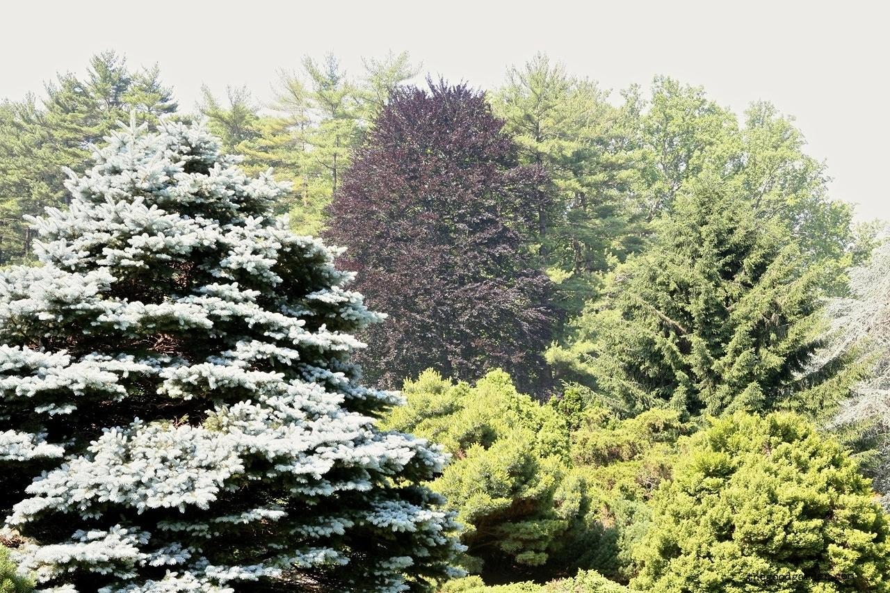 thegoodgarden|longwoodgardens|2174.JPG.jpg