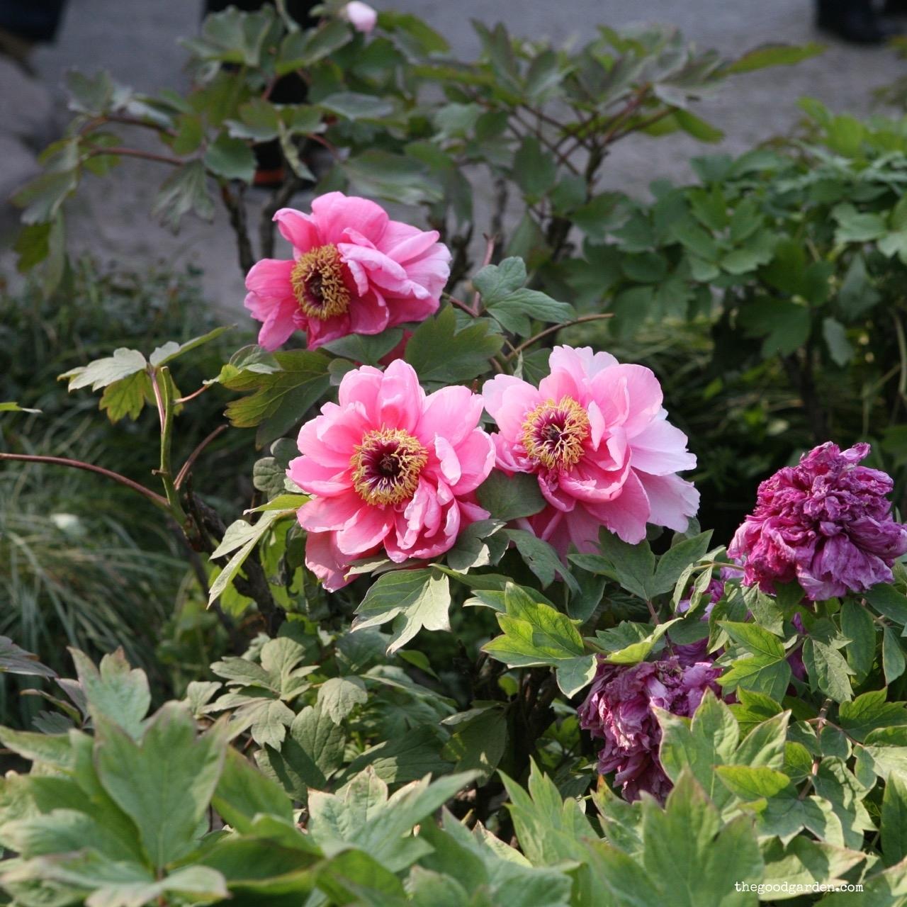 thegoodgarden|Suzhou|humbleadministratorsgarden|5262.jpg