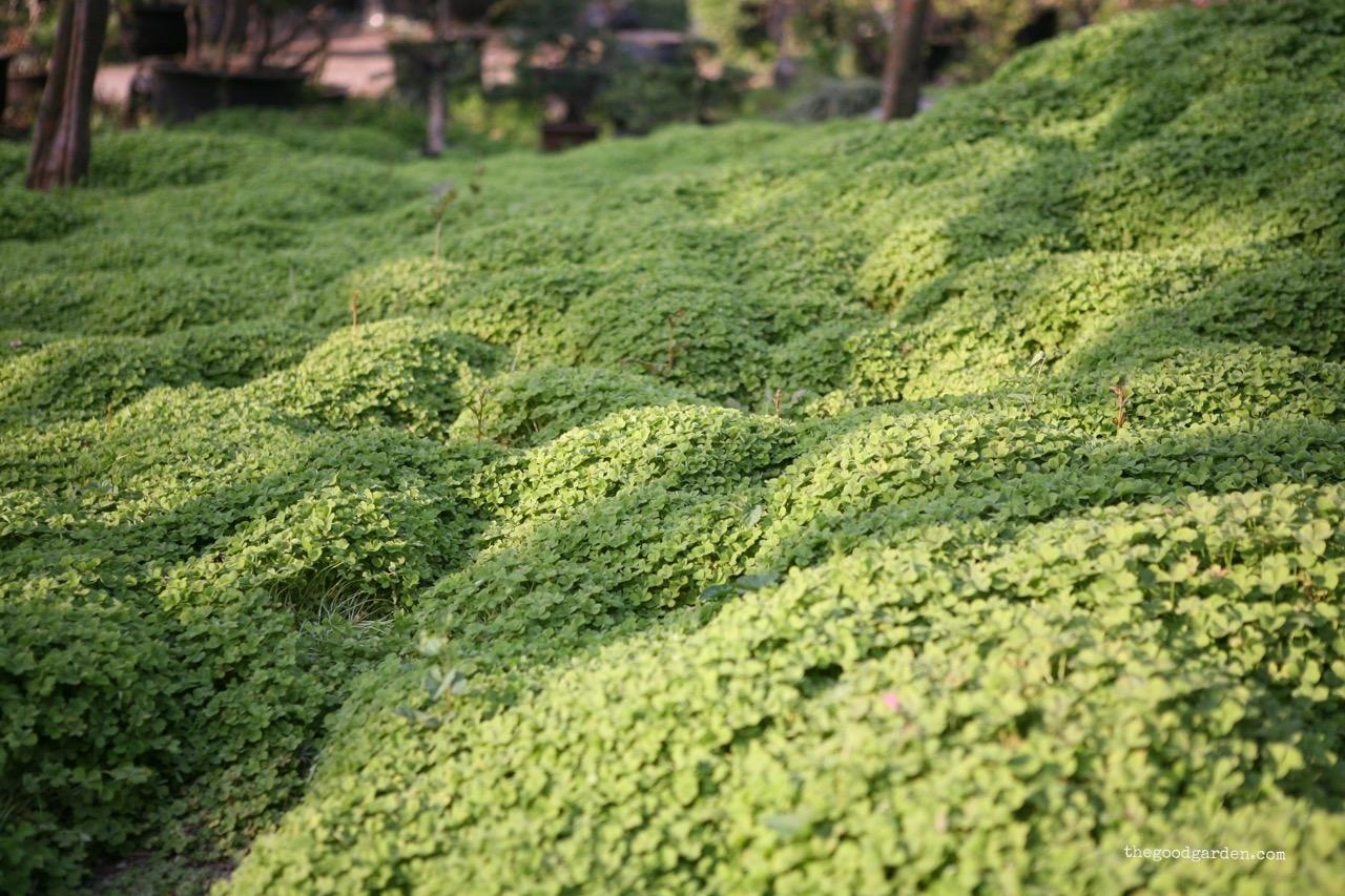 thegoodgarden|Suzhou|humbleadministratorsgarden|5345.jpg