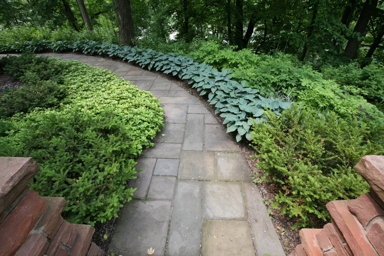 Stone pillars and a pair of yews mark the entrance to a section of the garden.  Ribbons of blue hosta     and pachysandra echo and soften the curve of the path.