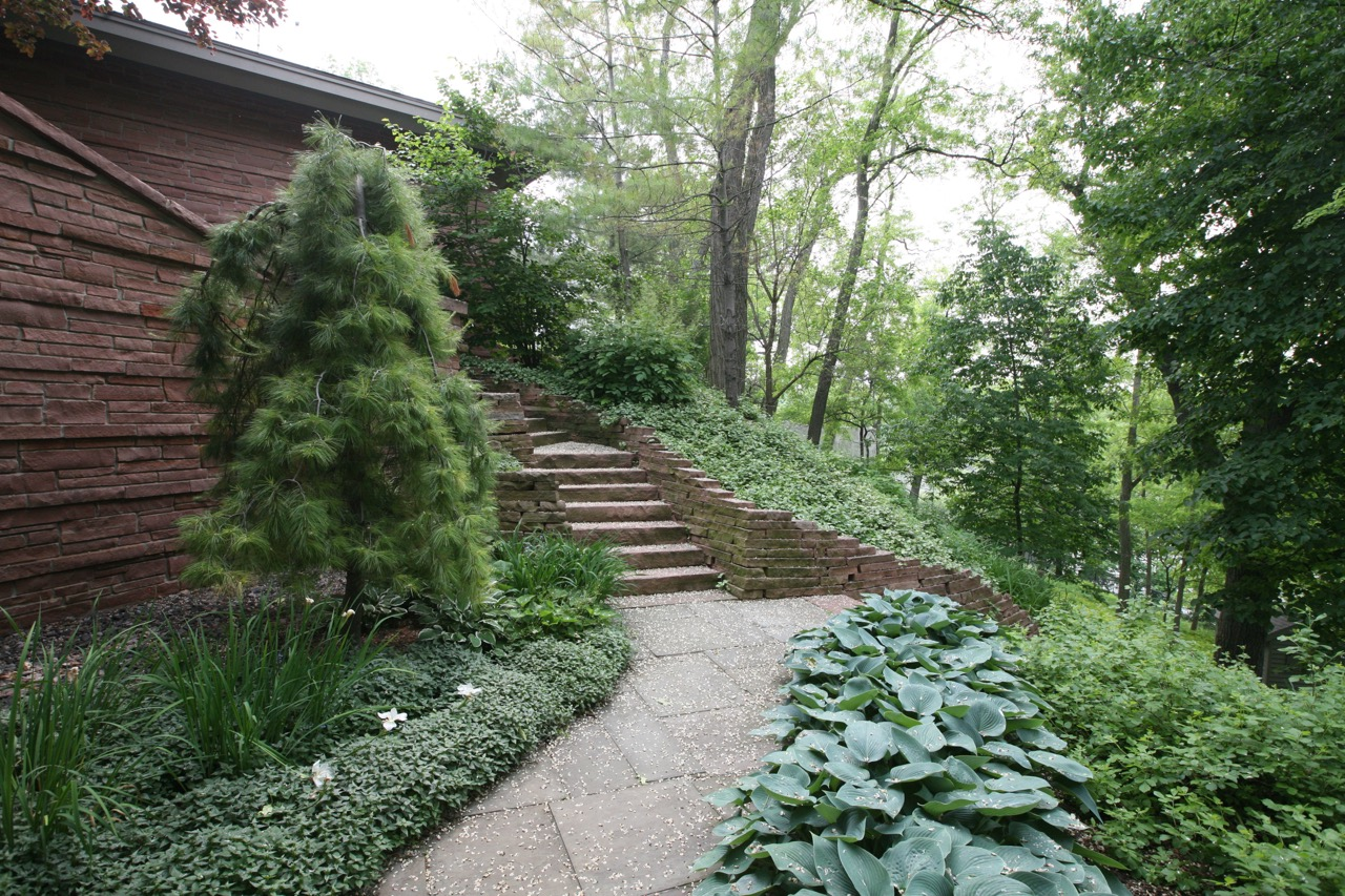 A weeping white pine completes a wonderful visual triangle with the winding stone stairs, blue   hosta  , and   L  amium  .