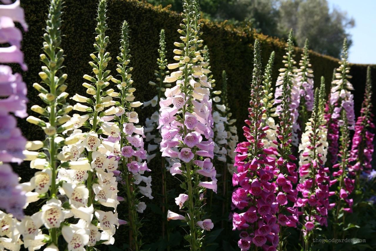 thegoodgarden|filoli|california|5378.jpg