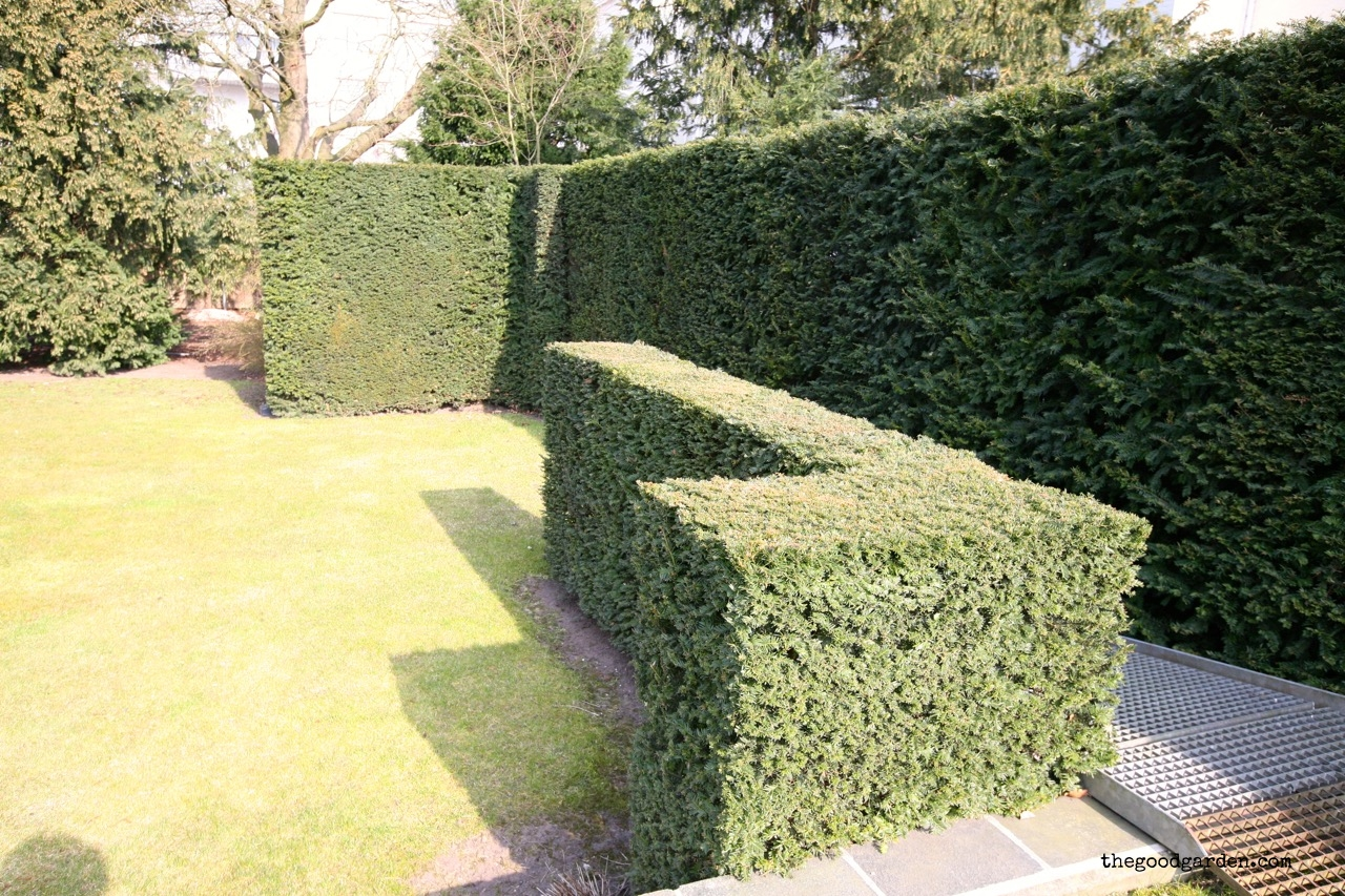 Bold hedges at the edge of the property mirror the exterior walls of the house.