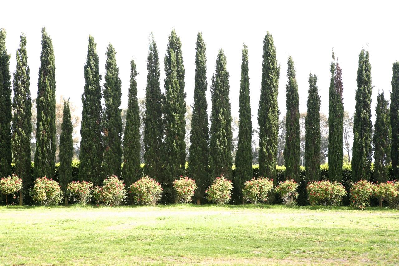 Back border at Russell Page's Giardini della Landriana.