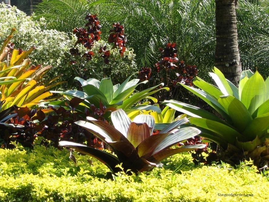 thegoodgarden|brazil|riodejaneiro|garden|882.jpg
