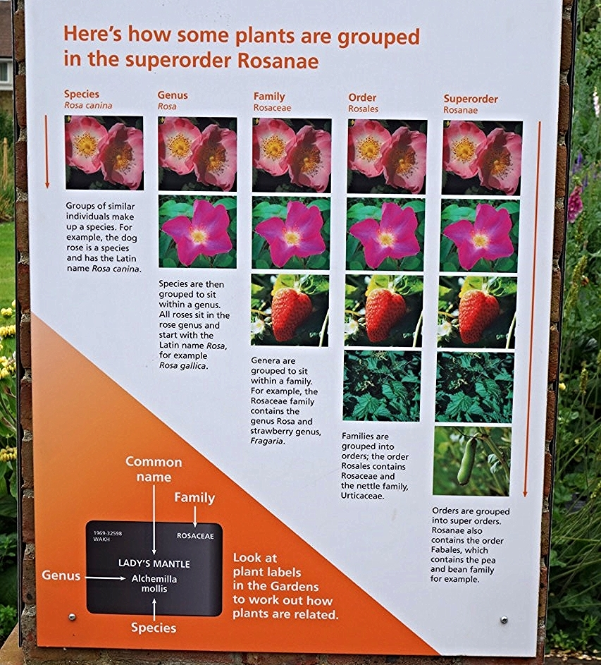 A plaque in the garden explains what plant names tell us.