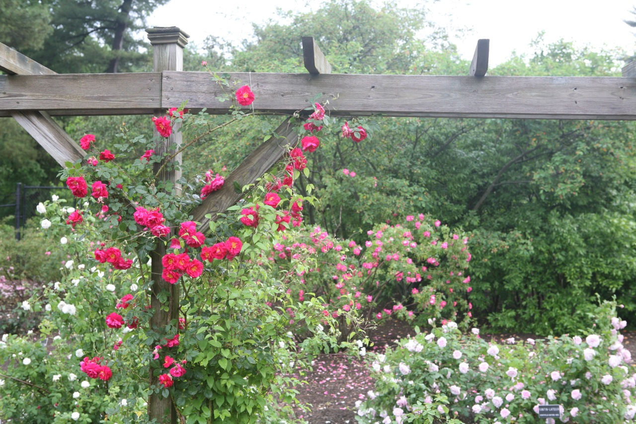 thegoodgarden|colonialpark|NJ|122.jpg
