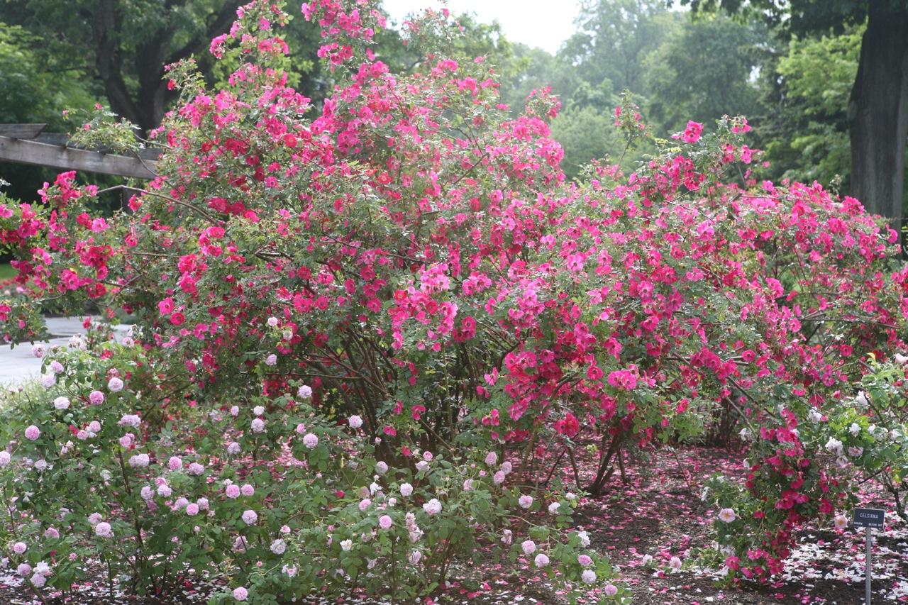thegoodgarden|colonialpark|NJ|197.jpg