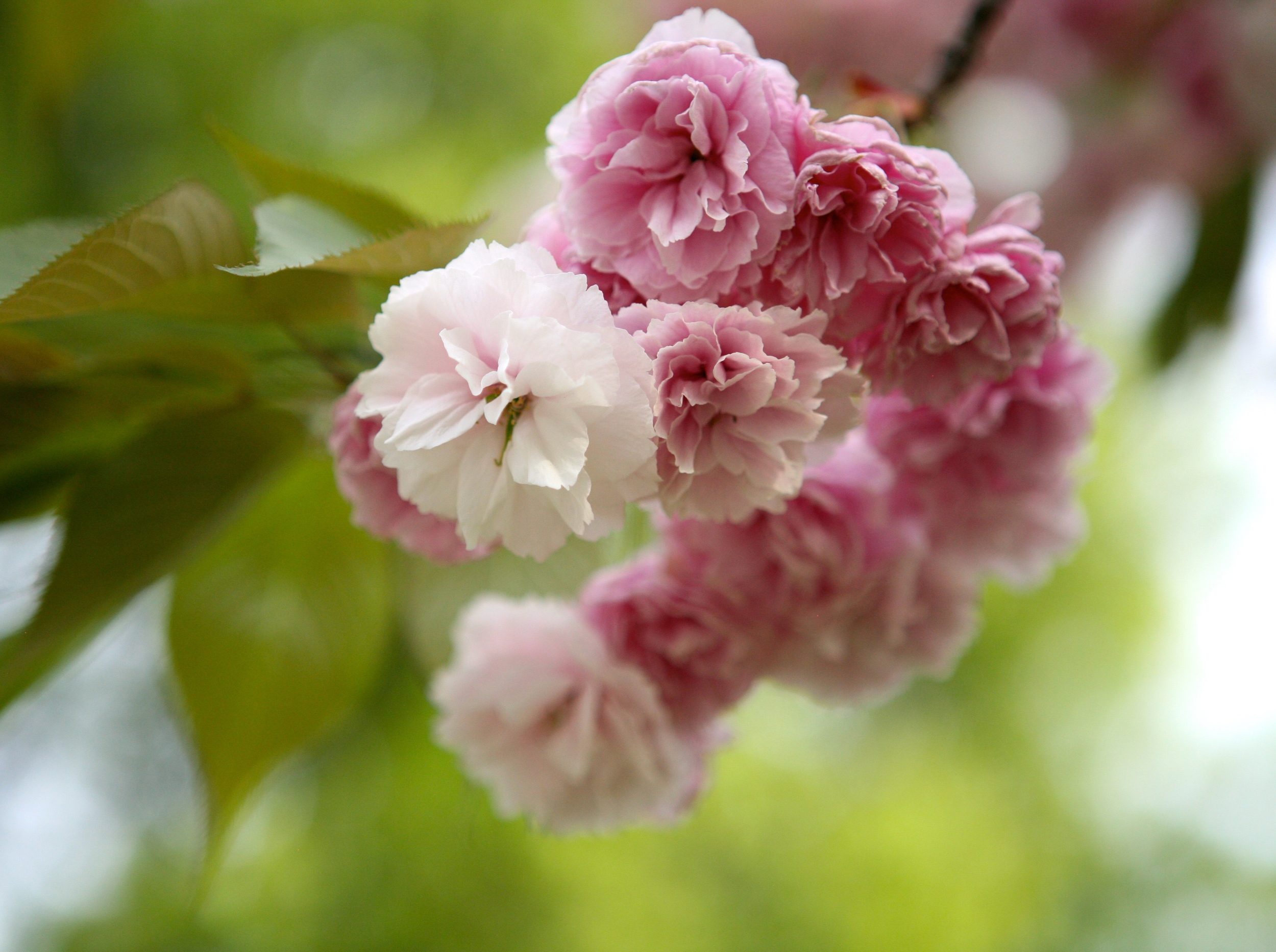 thegoodgarden blossoms front 5.JPG