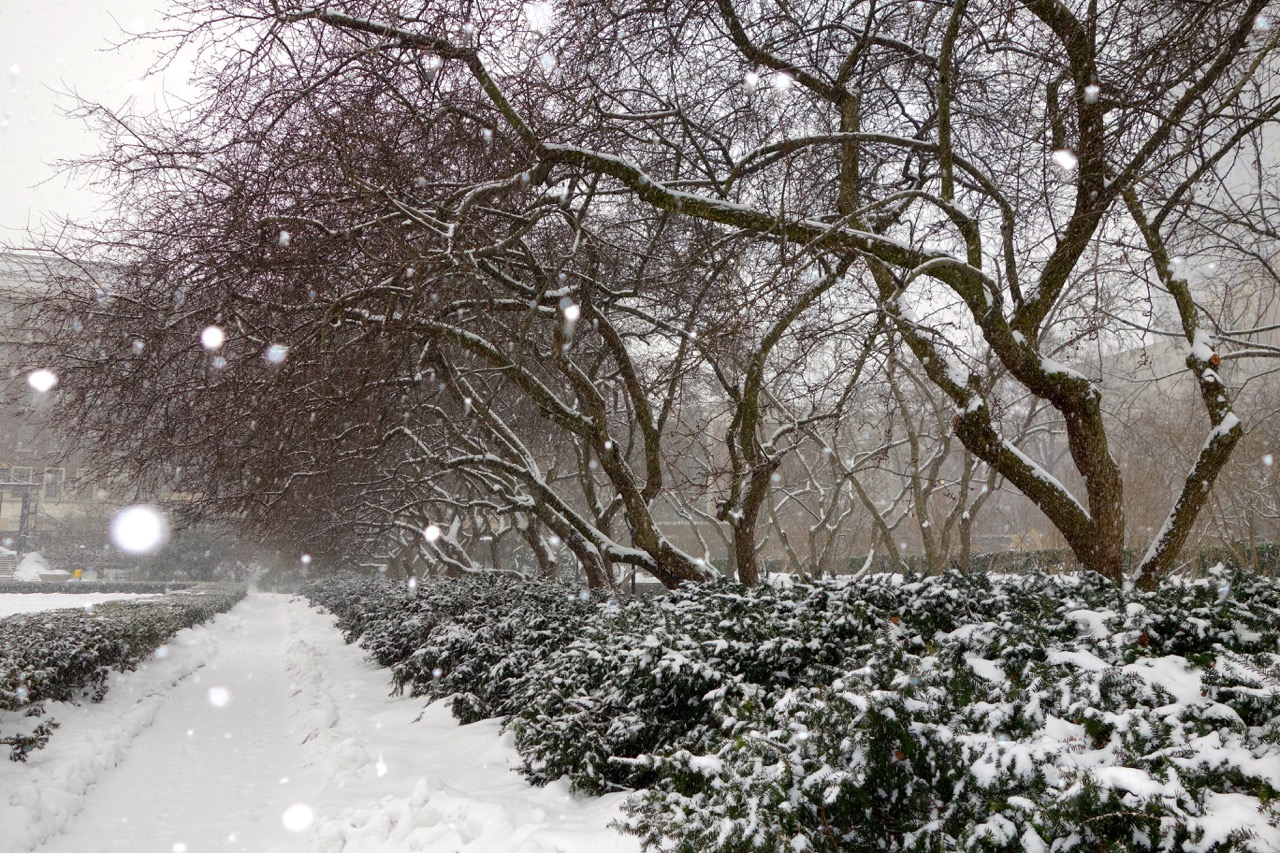thegoodgarden|centralpark|nyc|davidcalle|05378.jpg