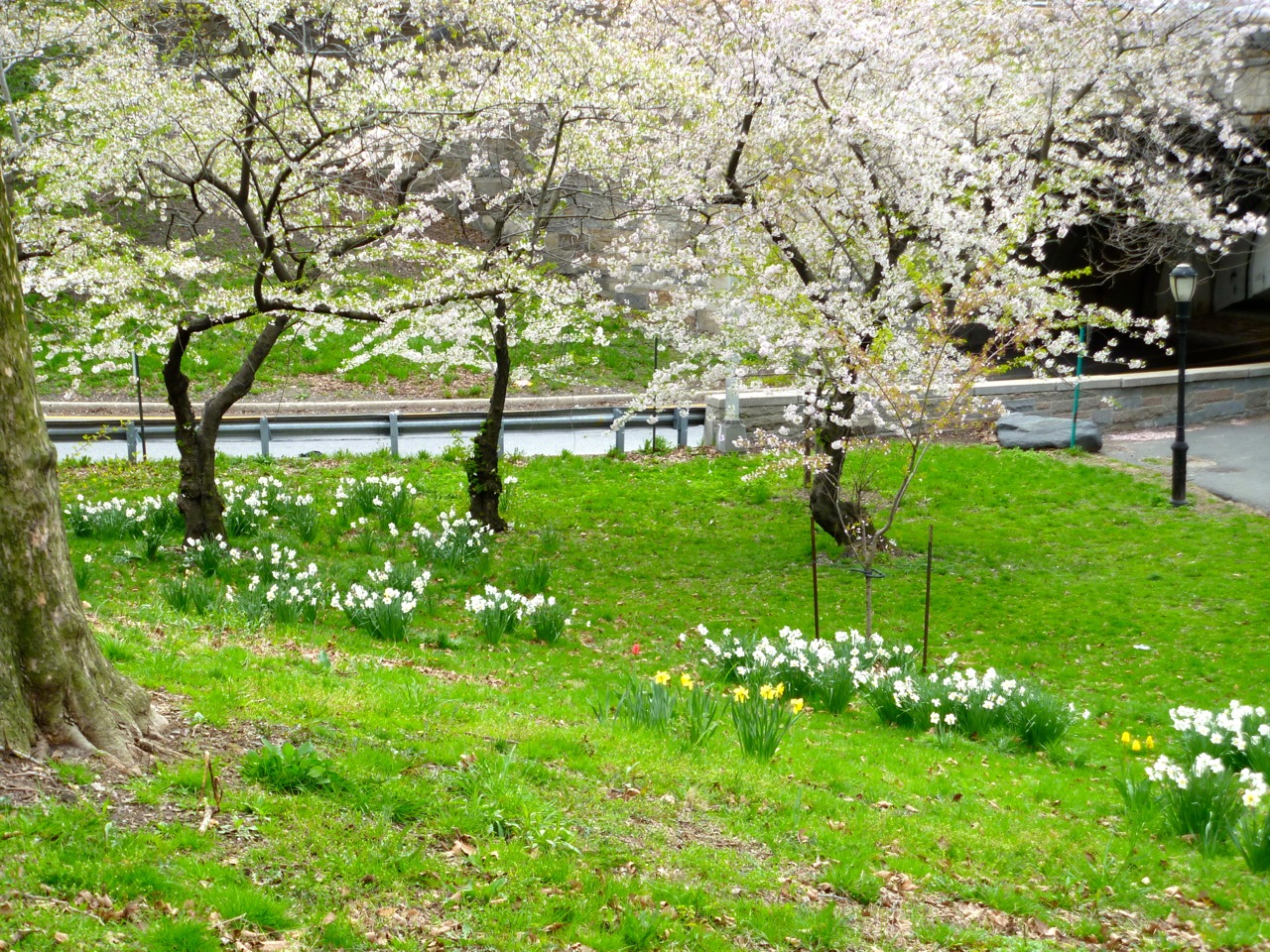 A section of Cherry Walk, Riverside Park, New York.