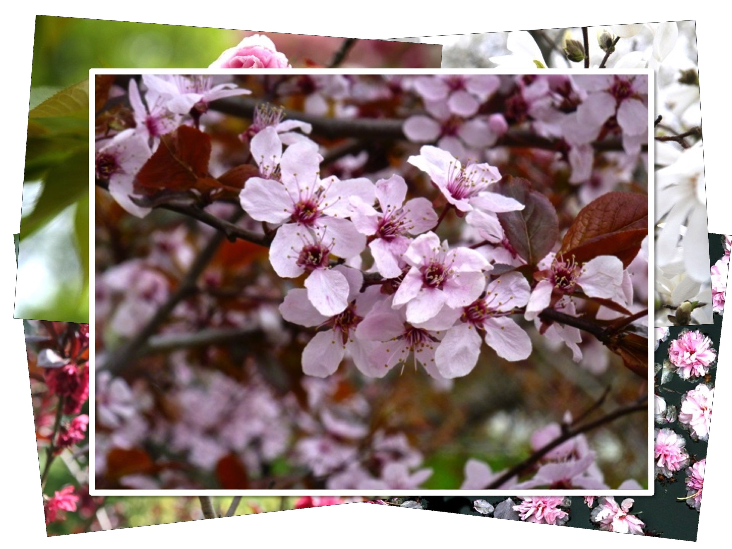 Share the beauty of the spring garden with  Good Garden notecards .