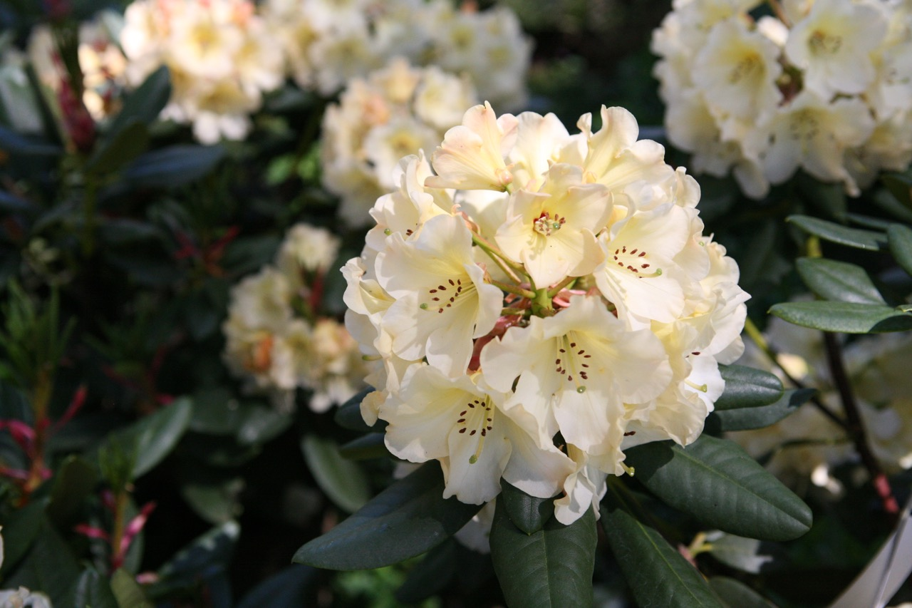 thegoodgarden|davidcalle|usrhododendrongarden_2513.jpg