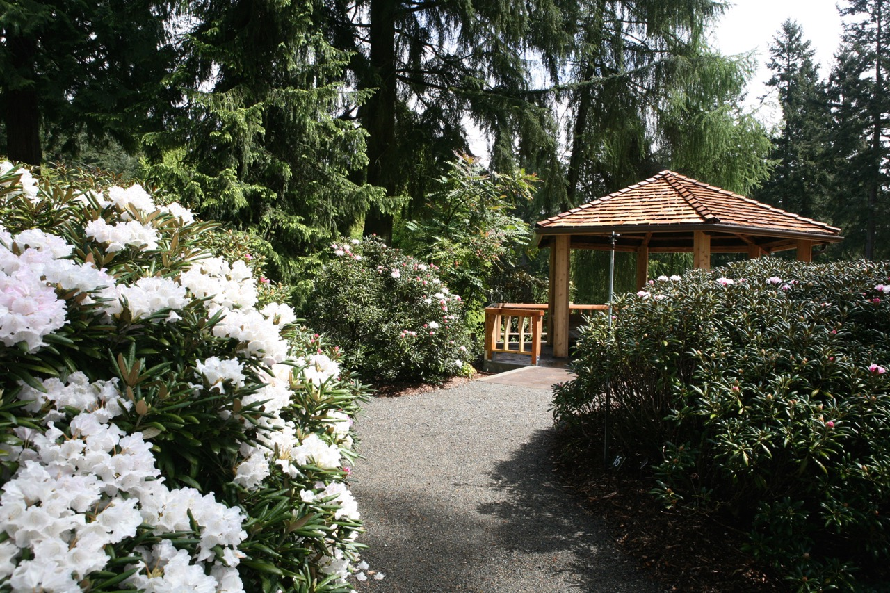 thegoodgarden|davidcalle|usrhododendrongarden_2885.jpg