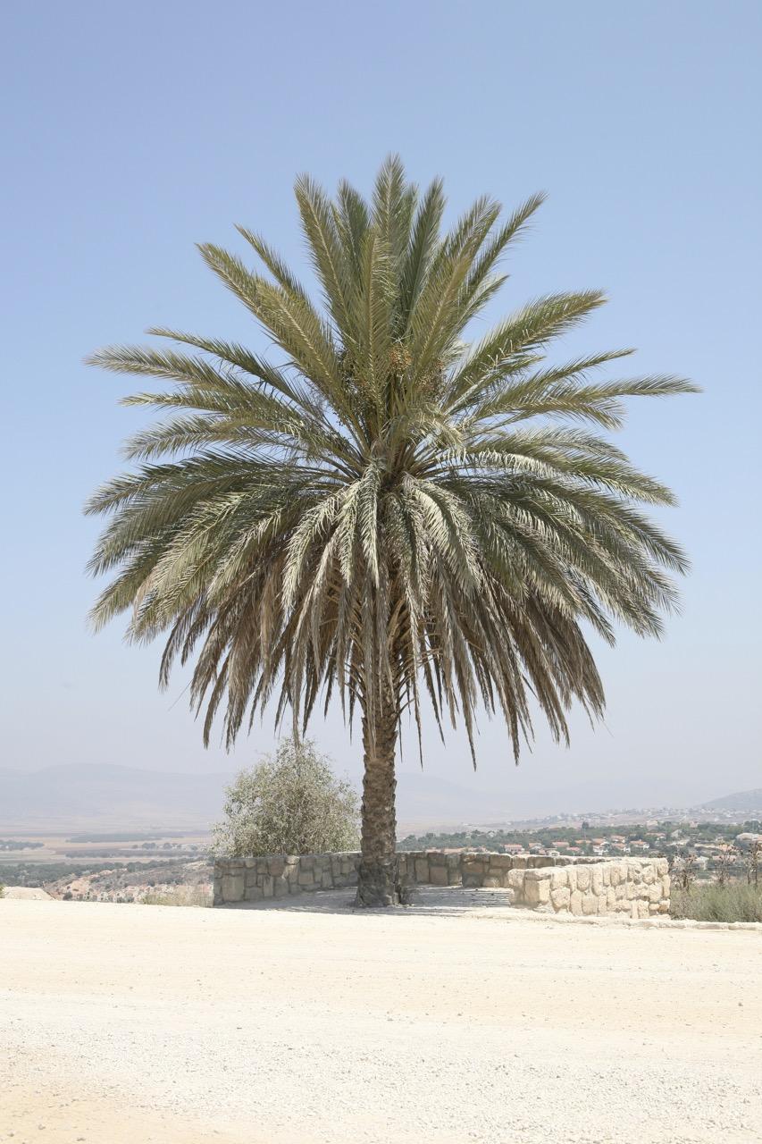 thegoodgarden|davidcalle|israel_1310.JPG.jpg