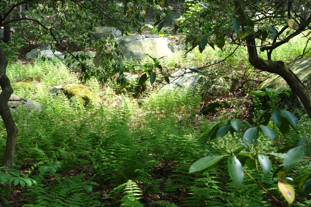 thegoodgarden|davidcalle|manitoga|02615.jpg