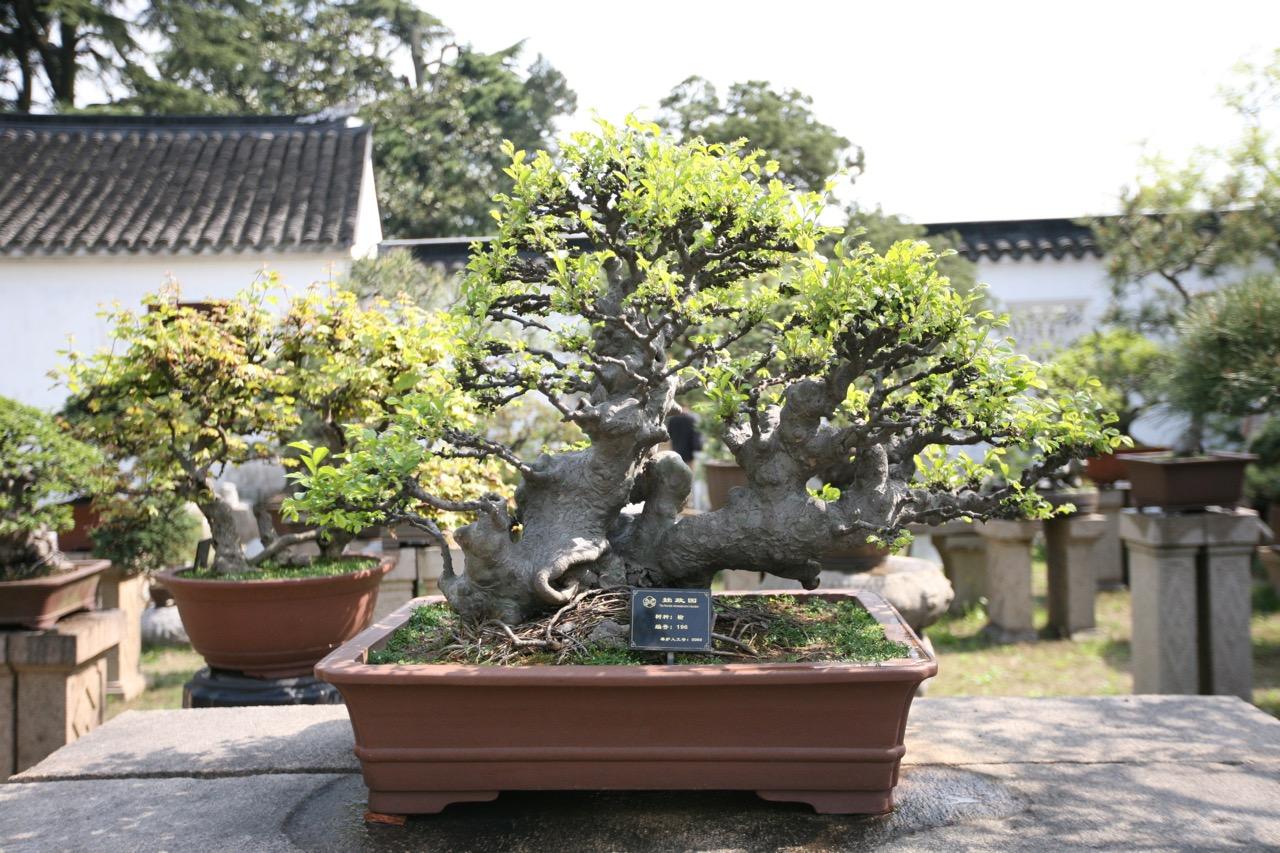 thegoodgarden|Suzhou|humbleadministratorsgarden|5049.jpg