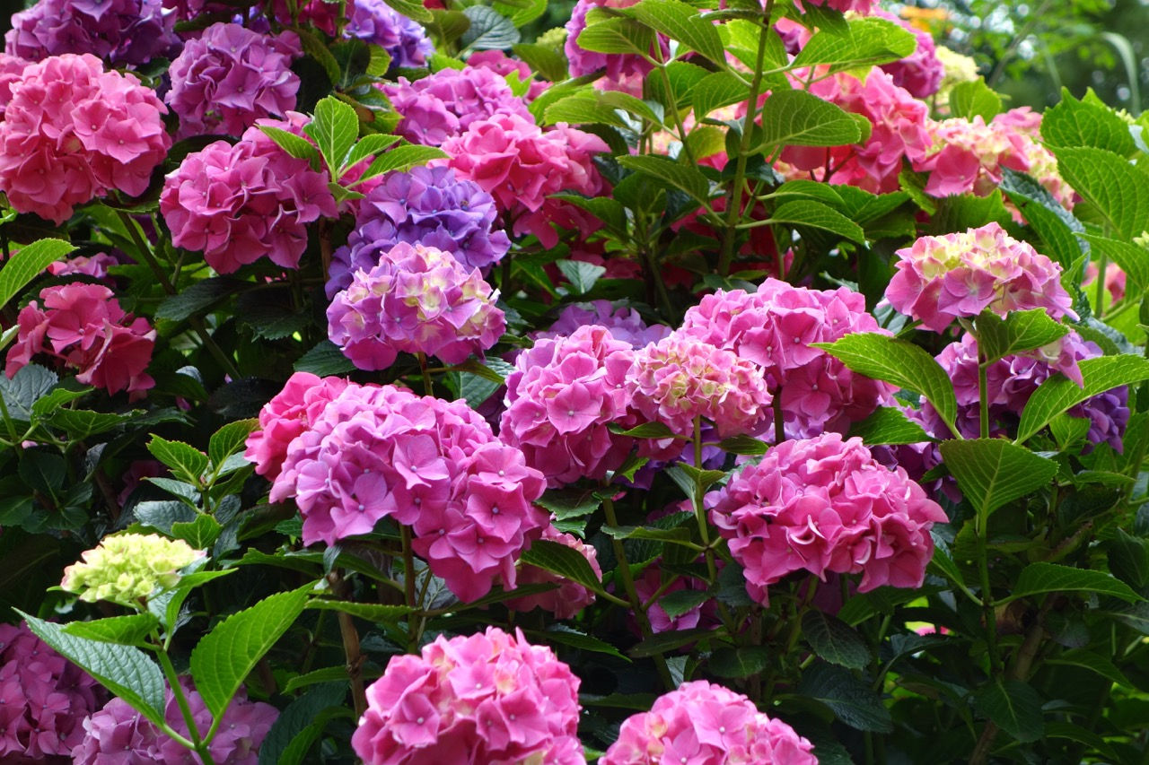 thegoodgarden|davidcalle|riversidepark|gardenpeople03488.jpg