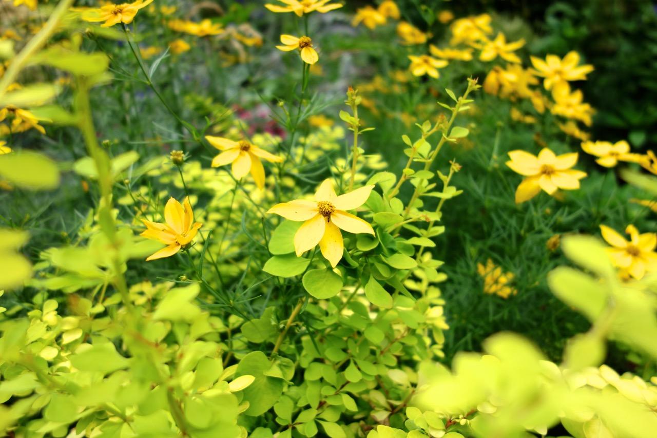 thegoodgarden|davidcalle|riversidepark|gardenpeople03516.jpg