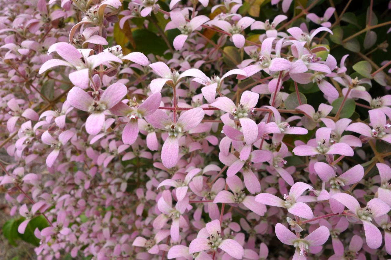 thegoodgarden|davidcalle|cuba|cienfuegosbotanicalgarden|00655.jpg