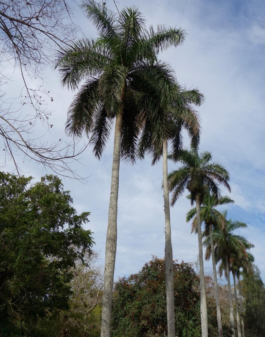 thegoodgarden|davidcalle|cuba|cienfuegosbotanicalgarden|00751.jpg