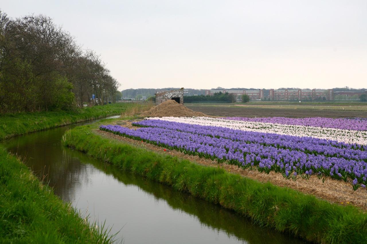 thegoodgarden|tulipfields|netherlands3216.jpg