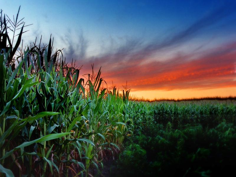 Photo Credit:  Cornfield sunset   by James Jordan