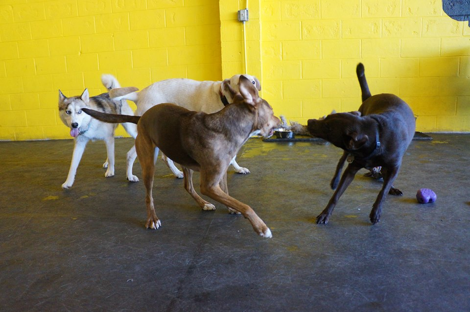 Fun and games at  Paws & Relax