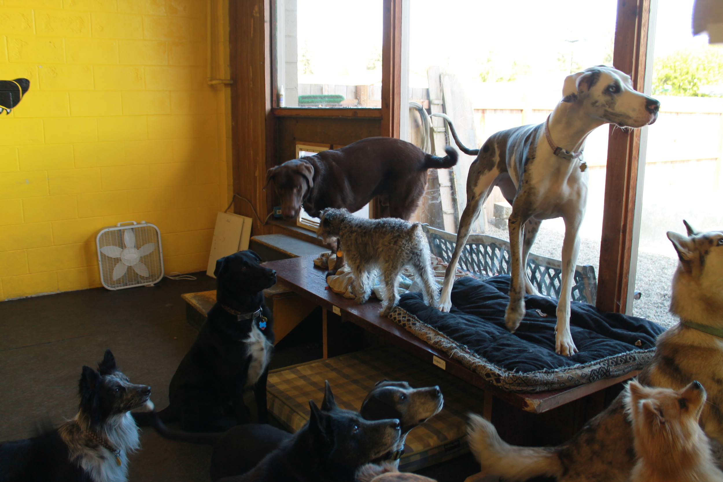 The gang assembles for treats at  Paws & Relax
