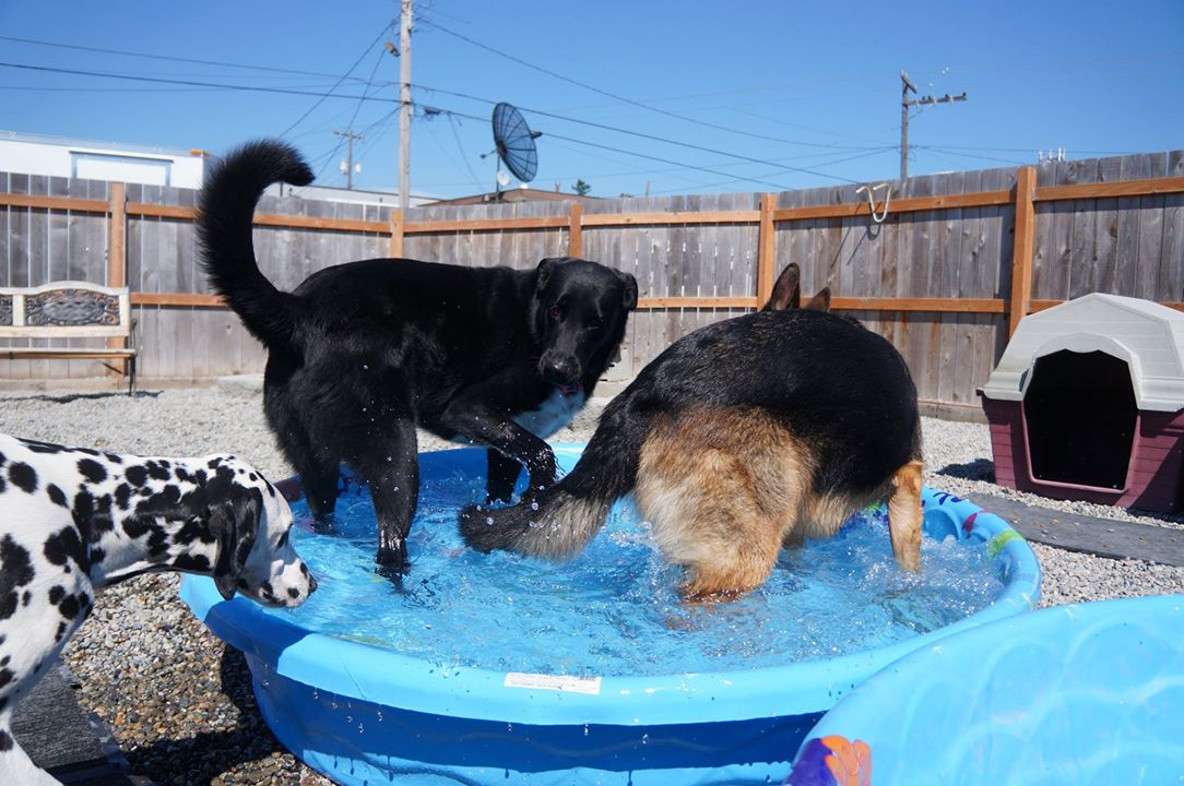 Alice, Bo and Loki cool off on a summer afternoon at  Paws & Relax