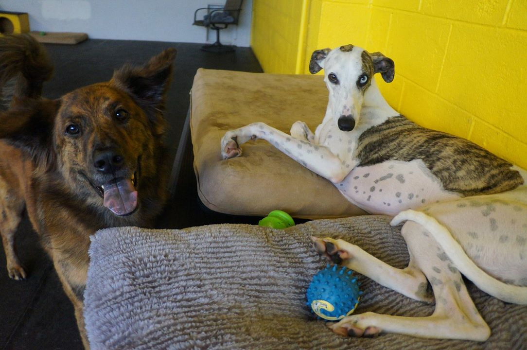 Zee and Strider love coming to  Paws & Relax