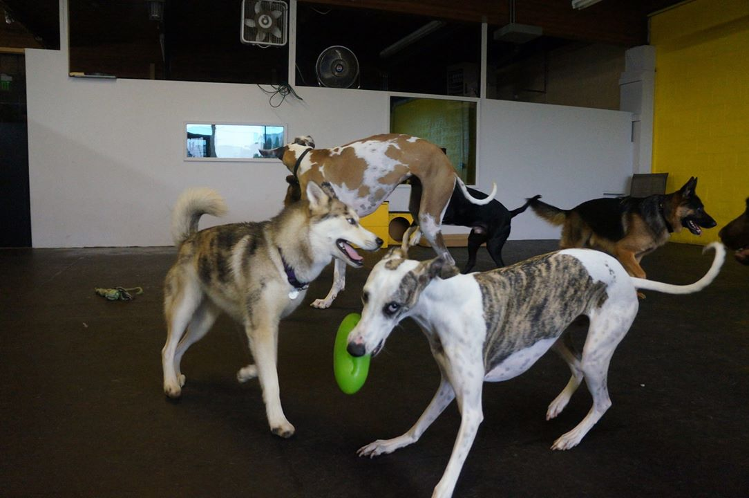 Joey and Strider wrestle over a frisbee