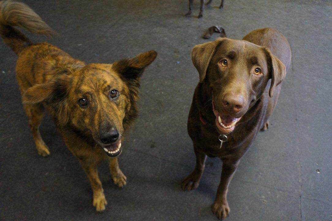 Zee and Oso - daycare buds